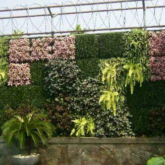 tukang taman vertikal garden