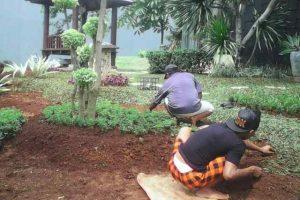 Tukang Taman Tambun Bekasi